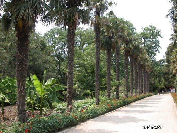 Никитский ботанический сад фото