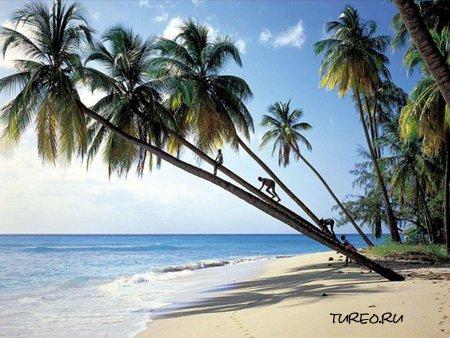 фото пляж бага гоа