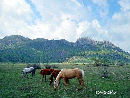 Природа Крыма (фото)