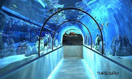 Алуштинский аквариум
