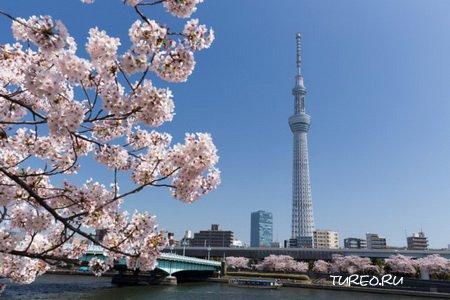 Япония. Советы туристам.
