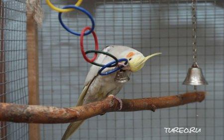 Жерди для попугаев